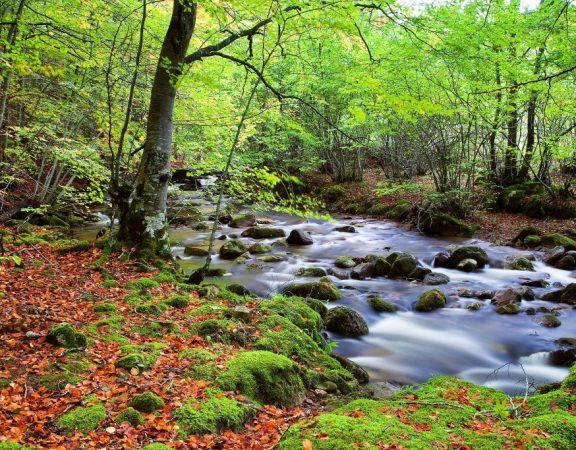 Senderismo, trekking y ascensiones fáciles